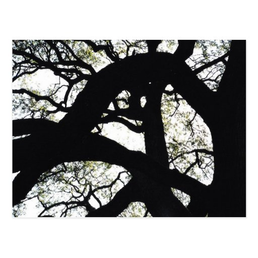 Ciérrese para arriba de ramas de árbol desnudas postales