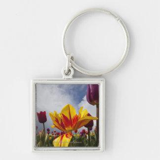 Ciérrese para arriba de tulipanes florecientes col llavero cuadrado plateado