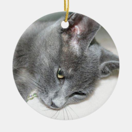 Ciérrese para arriba de un gatito gris adorno redondo de cerámica