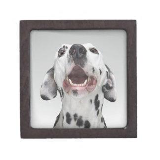 Ciérrese para arriba de un perro dálmata cajas de recuerdo de calidad