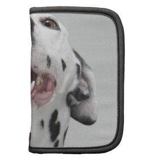 Ciérrese para arriba de un perro dálmata