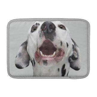 Ciérrese para arriba de un perro dálmata fundas macbook air