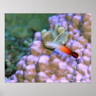 Ciérrese para arriba de un pescado del dardo del f posters