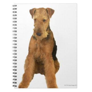 Ciérrese para arriba de un terrier del airedale libros de apuntes con espiral