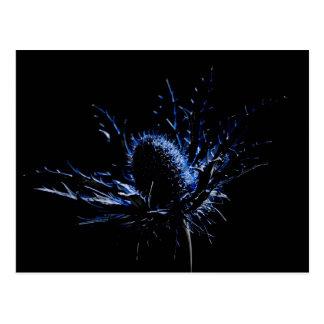 ciérrese para arriba de una flor espinosa del flor postal