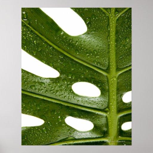 Ciérrese para arriba de una hoja de palma verde co poster