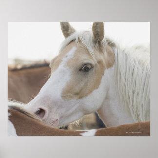 Ciérrese para arriba de una manada de los caballos posters