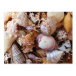 Ciérrese para arriba de una variedad de seashells tarjeta postal
