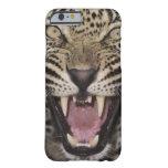 Ciérrese para arriba del leopardo que gruñe