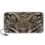 Ciérrese para arriba del leopardo que gruñe laptop altavoces