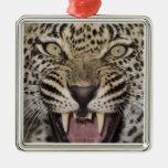Ciérrese para arriba del leopardo que gruñe ornamento para arbol de navidad