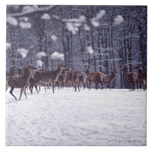 ciervo común azulejos ceramicos