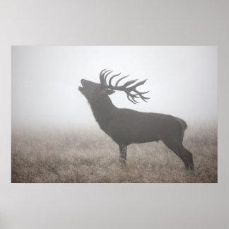 Ciervo común en el poster de la niebla