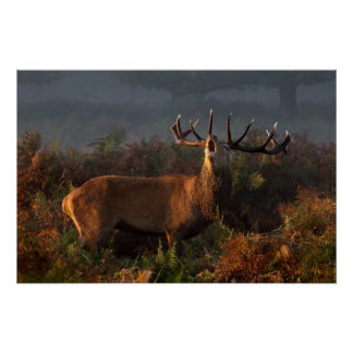 Ciervo común en el poster del amanecer
