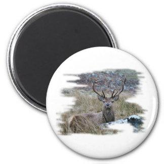 Ciervo común que mira fijamente abajo imán redondo 5 cm
