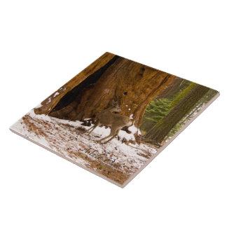 Ciervo mula azulejo cuadrado grande