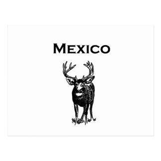 Ciervo mula de México (mulo del ciervo) Postal