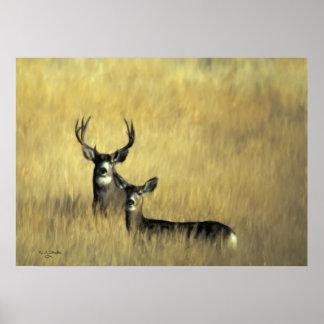 Ciervo mula en cepillo impresiones