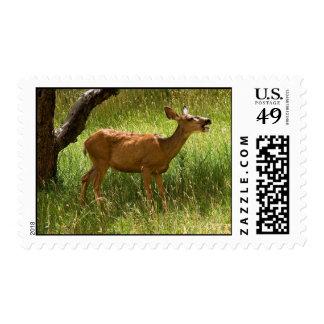 Ciervo mula en el manzanar sellos