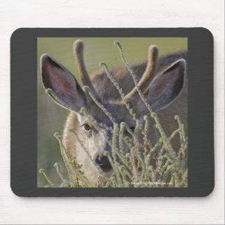 Ciervo mula en Malheur NWR Tapete De Raton