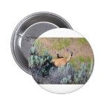 Ciervo mula, una gama y cervatillo pins