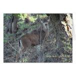 Ciervos (1a) - personalizable felicitación