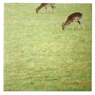 ciervos 2 azulejo cuadrado grande