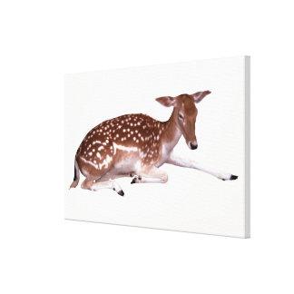 ciervos 2 impresión en lienzo estirada