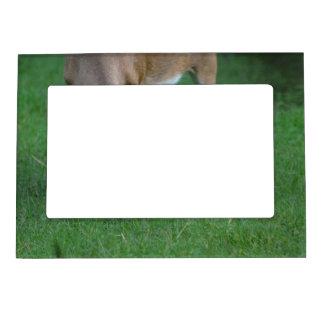 Ciervos adorables marcos magnéticos de fotos