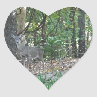 Ciervos al borde de las maderas pegatina en forma de corazón