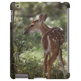 ciervos Blanco-atados, virginianus del Odocoileus, Funda Para iPad