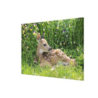 ciervos Blanco-atados (virginianus del Odocoileus) Impresiones En Lona