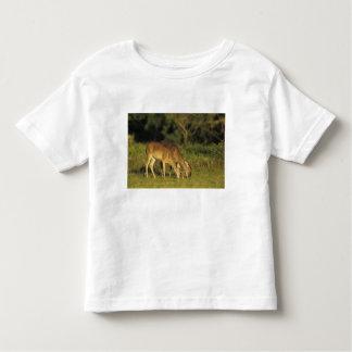 ciervos Blanco-atados, virginianus del Odocoileus, Tshirts