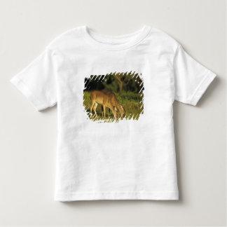 ciervos Blanco-atados, virginianus del Odocoileus, Camisetas