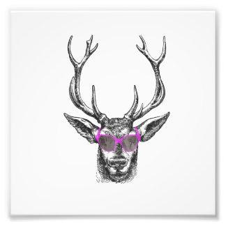 Ciervos con las gafas de sol rosadas fotografías