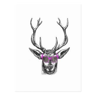 Ciervos con las gafas de sol rosadas tarjeta postal