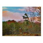 Ciervos con un cielo azul rosado postales