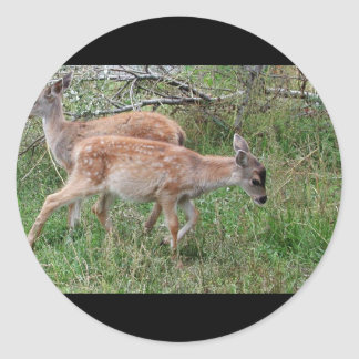 Ciervos de cola negra de Sitka Etiquetas Redondas