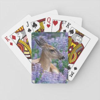 Ciervos de cola negra, gama que descansa en lupine cartas de póquer