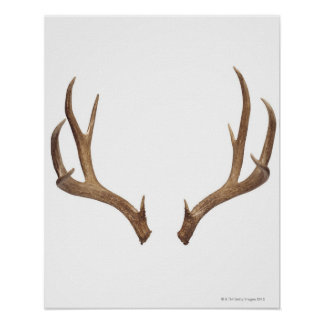 Ciervos de diez puntos póster