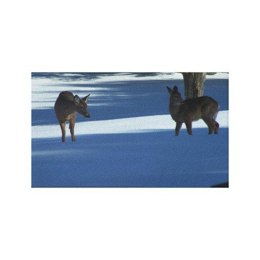 Ciervos de Havenwood Lona Estirada Galerías