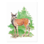 Ciervos de la acuarela, fauna de la naturaleza ani tarjetas postales