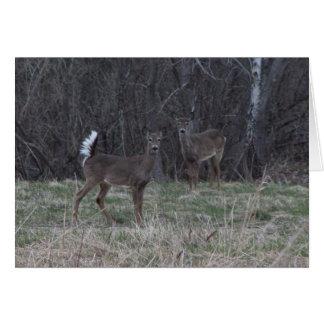 Ciervos de la cola blanca tarjeta de felicitación