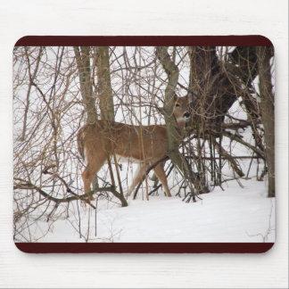 Ciervos de la cola blanca y maderas Nevado Tapete De Raton