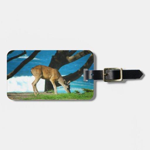 Ciervos de la costa etiquetas maleta