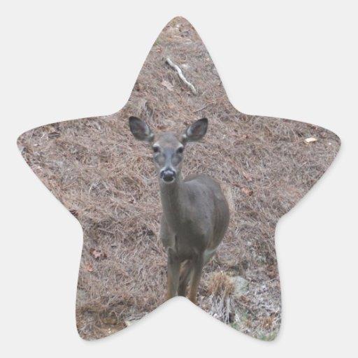 Ciervos de la gama en la paja del pino pegatina en forma de estrella