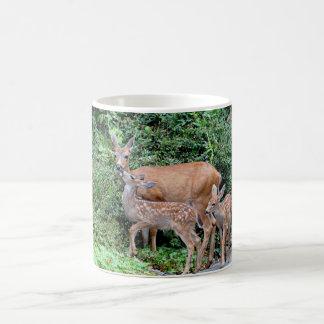 Ciervos de la madre y foto de los cervatillos taza