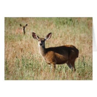 Ciervos de la mamá y del bebé tarjeta de felicitación