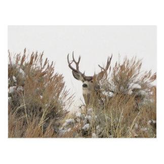Ciervos de Wyoming Postal