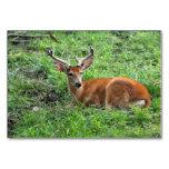 Ciervos de Young Buck en hierba